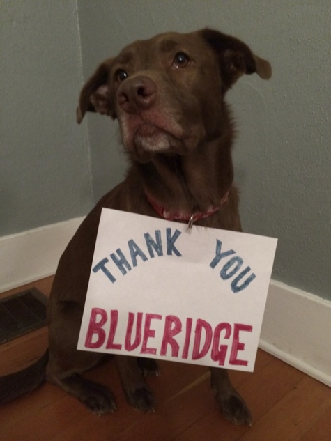 The dog that jumped out the window – how the Blueridge Community helped me to find my lost dog.